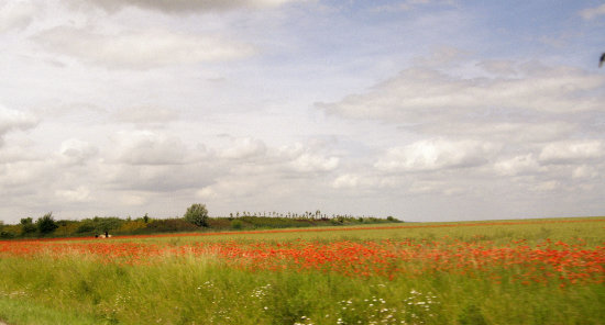 A poppy field on the outskirts of York