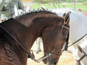 3 Beautiful horses El Rocio